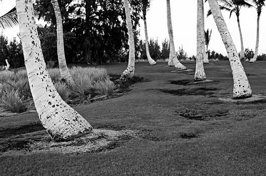 James Steele - Hawaii palms