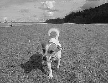 Hawaiian Beach Dog by Blake Yeager