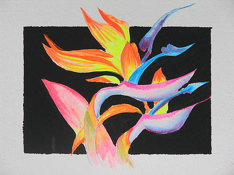 Hawaiian Bird of Paradise by Peggy Mars