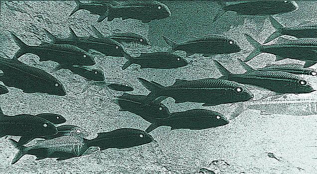 Bill Owen - Hawaiian Goatfish School