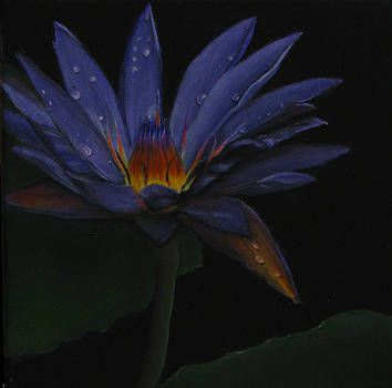 Hawaiian Water Lily - purple by Sherry Robinson