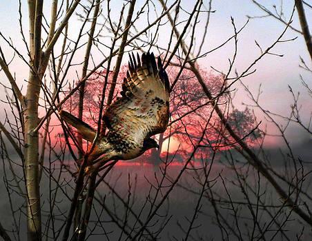 Marty Koch - Hawk At. Sunrise