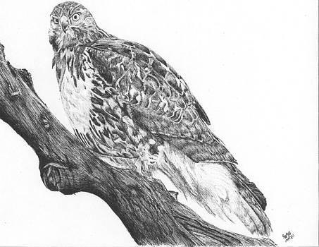 Hawk on a tree limb by Reppard Powers