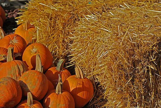 Michelle Cruz - Hay and Pumpkins
