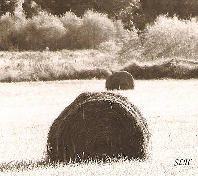 Hay bells in the evening by Lee Hartsell