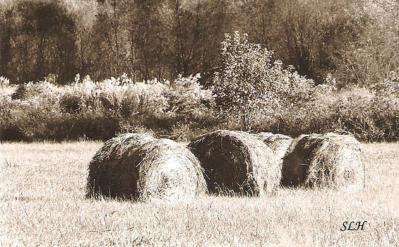 Hay bells by Lee Hartsell