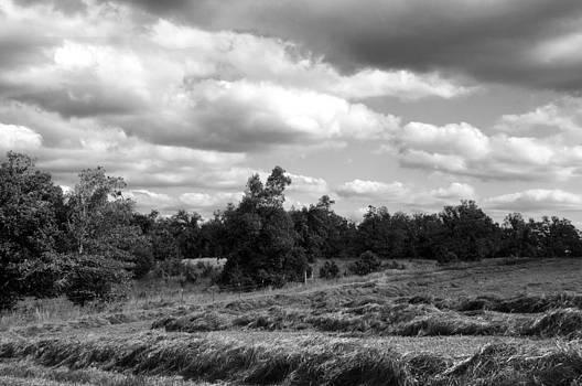 Hay Field by Misty Achenbach