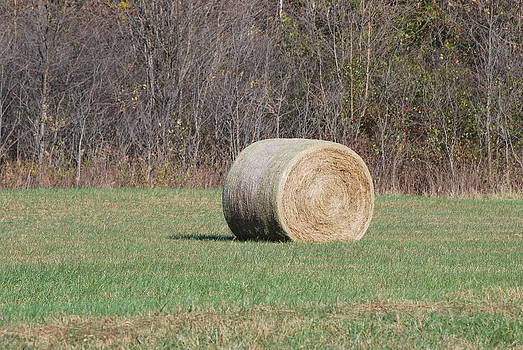 Hay by Michele Carter