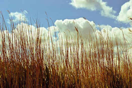 Hay Sun by Ruth MacLeod