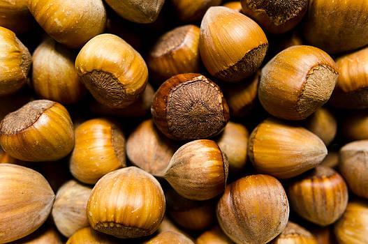 Hazelnuts by Daniel Kulinski