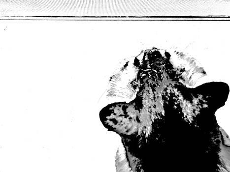 Head by Kornrawiee Miu Miu