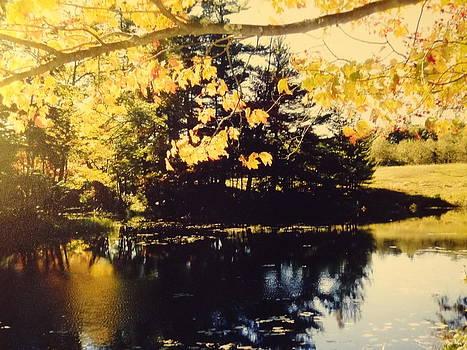Nancy Fillip - Heald Pond