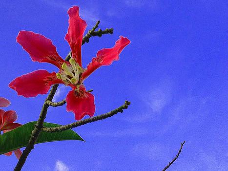 Healing flower by Jesus Nicolas Castanon