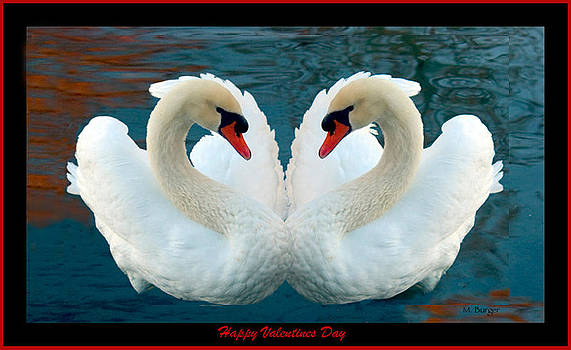 Heart Swans - Happy Valentines Day by Marlena  Burger