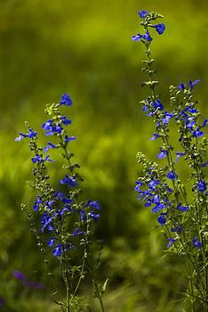 Heavenly blue by Cindy Rubin