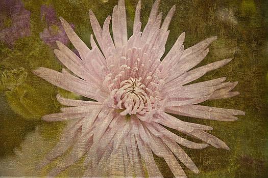 Heirloom Pink by Ramona Murdock