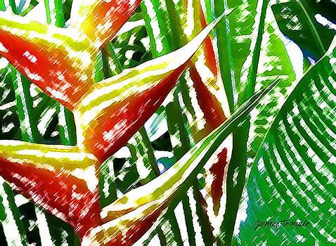 James Temple - Heliconia