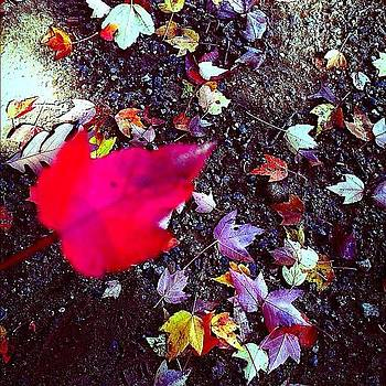 Hello Fall 😊😊 #fall #colors  #red by Caitlin Salvitti