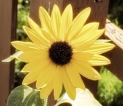 Hello Sunshine by Carol Kristensen