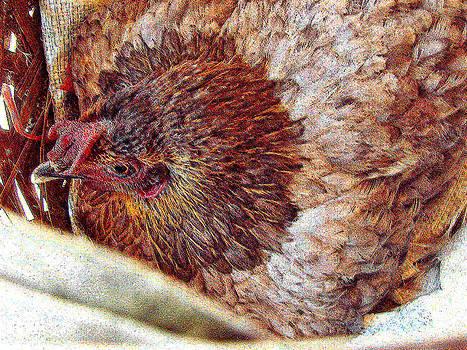 Roy Foos - Hen Sits On Eggs