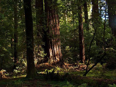 Henry Cowell Redwoods Santa Cruz California Landscape photography Larry Darnell by Larry Darnell
