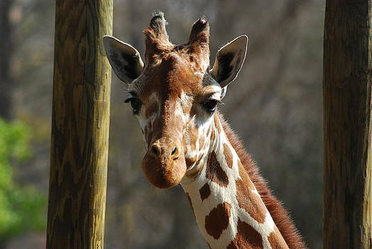 Here is Looking at You by Wanda Jesfield