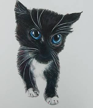 Here Kitty by Joan Pollak