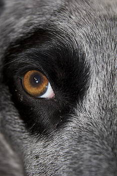 Heres looking at you by Michael Clarke JP