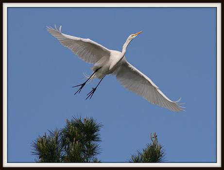 Heron Flight by Rick Mutaw