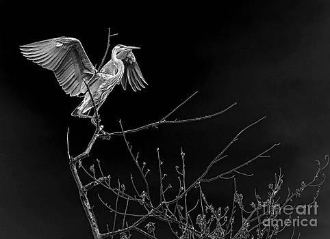 Heron In Contrast by Sue Stefanowicz