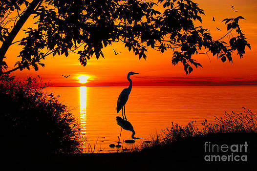 Heron Silhouette by Megan Noble