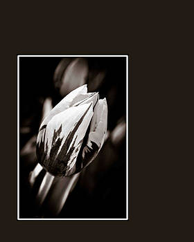 Hershey Kiss  by Angela  Benthin