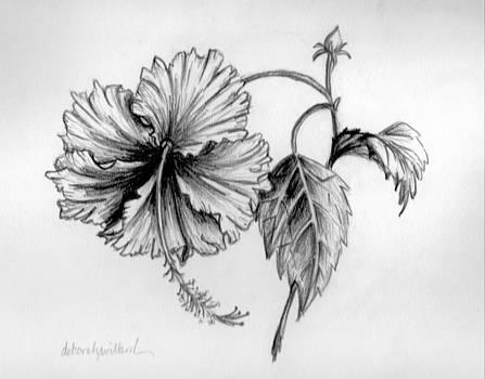 Hibiscus Ballet by Deborah Willard