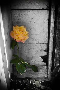 Wayne Stacy - Hidden Color
