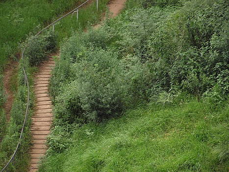 Hidden Path by Rani De Leeuw