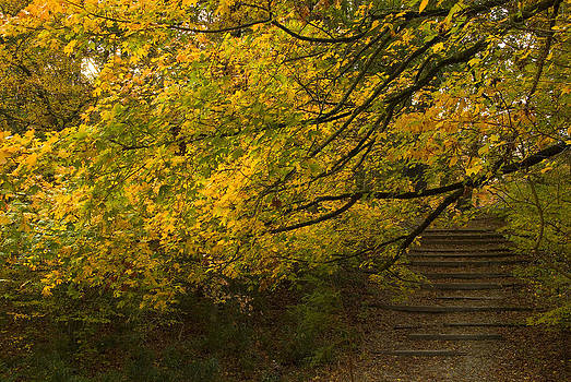 Hidden Stairs by Cindy Rubin