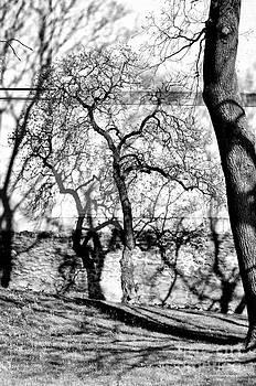 Hidden tree by Matthias Siewert