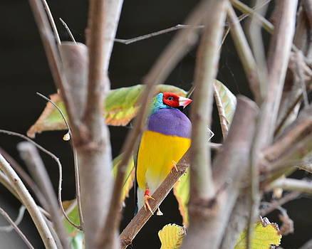 Hiding bird by Mandi Howard