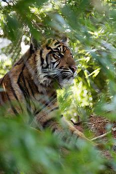 Hiding in the Brush by Lindy Spencer