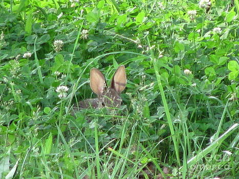 Hiding in the Clover by Michele Bishop