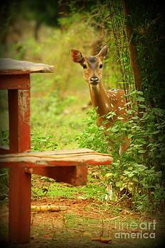 Hiding by Vishakha Bhagat