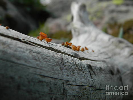 High Country Mushrooms by Sara  Mayer