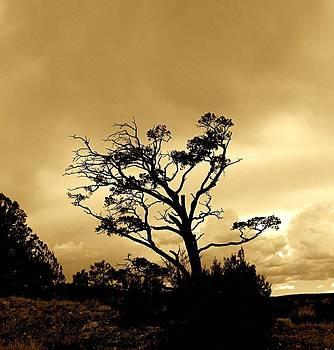 FeVa  Fotos - High Country Tree