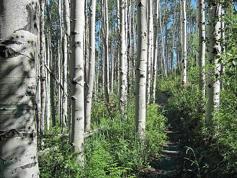 James Woody - Hiking Through Aspens at Beaver Creek