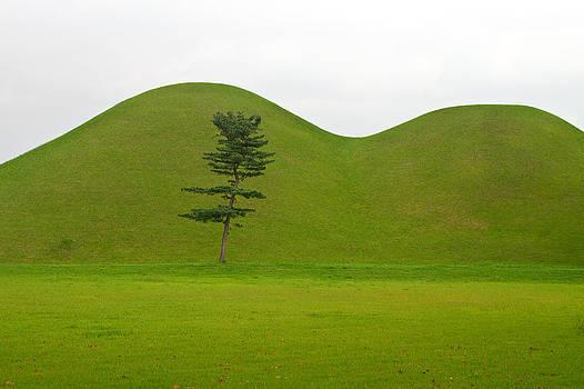 Hill tombs and tree Korea by Gabor Pozsgai