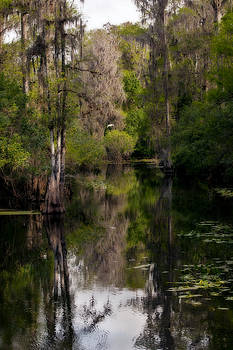 Hillsborough River In March by Steven Sparks