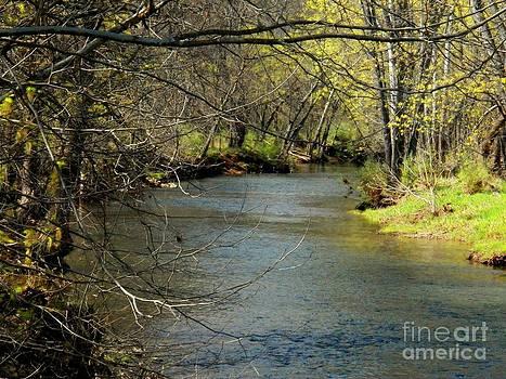 Hogue Creek  by Joyce Kimble Smith