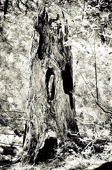 Christina Klausen - Hollowed Tree