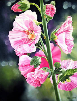 HollyhocK by Donna Francis