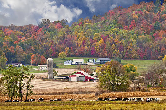 Randall Branham - Holstein Cattle Farm